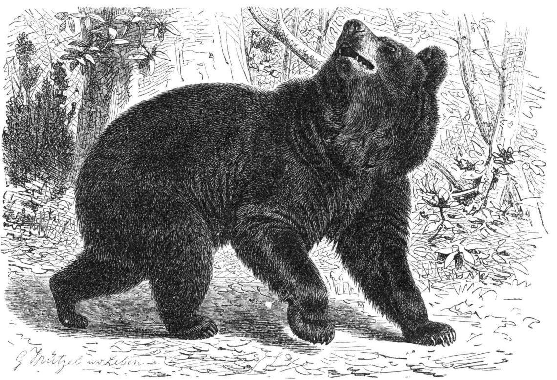 Bear Block Cut | SpiritMAMA Blog