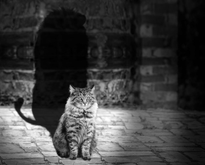 Cat Shadow | SpiritMAMA Blog