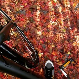 Bike with Leaves in Fall | SpiritMAMA